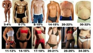 Body Fat Percentages For Men and Women