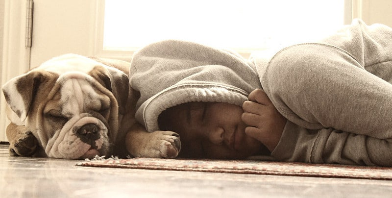 A Dog and a Child Sleeping