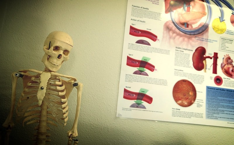 A Skeleton Next to a Wall Chart of the Body's Internal Organs