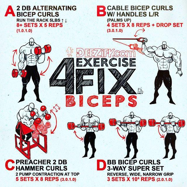 4 Exercise Biceps Fix