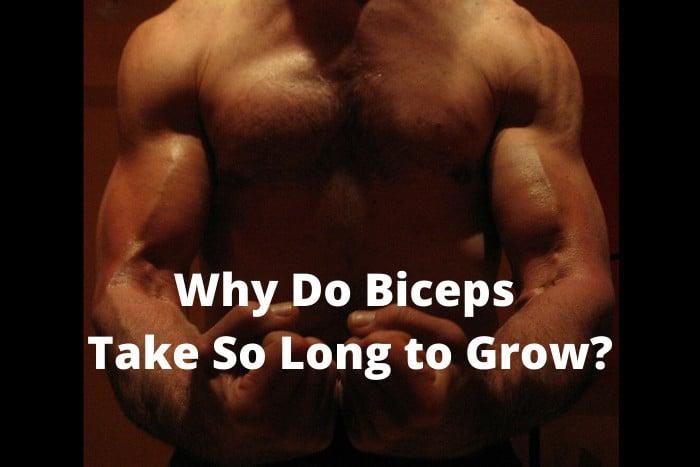 Why Do Biceps Take So Long to Grow
