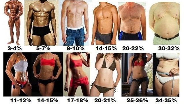 Male and Female Body Fat Percentages