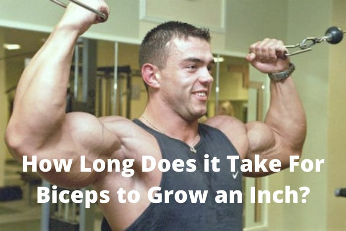 How Long Does it Take For Biceps to Grow an Inch
