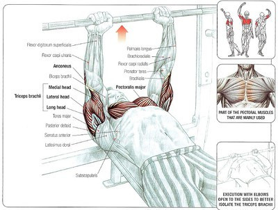 Close Grip Bench Press Muscles Worked