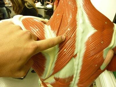 Rhomboid Minor
